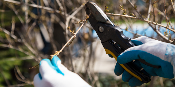 photo of tree pruning