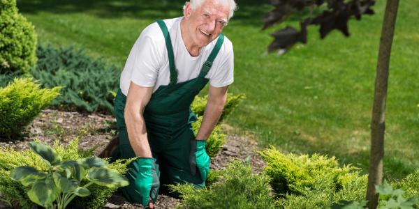 Photo of man in his garden bed